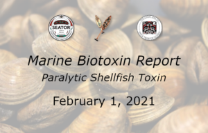 Read more about the article SOUTHEAST ALASKA MARINE BIOTOXIN REPORT | FEBRUARY 1, 2021